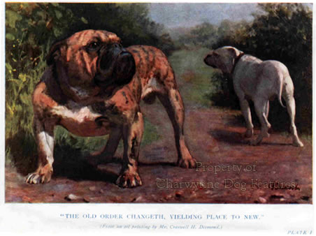 865-6a-desmonds-painting-of-bulldog-late-19th-century